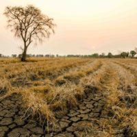 Учёные рассказали, что станет с климатом Ростовской области через 30 лет
