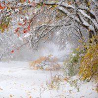 Синоптики рассказали, когда в Ростовской области выпадет первый снег